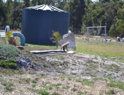 Banksia Park Puppies Brutus - 1 of 20 (16)