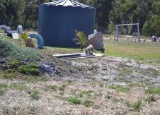 Banksia Park Puppies Brutus - 1 of 20 (3)