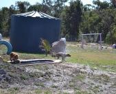 Banksia Park Puppies Brutus - 1 of 20 (4)