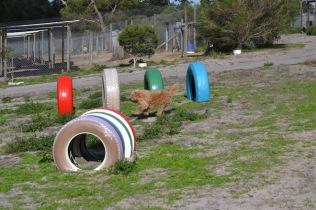 Banksia Park Puppies Brutus - 10 of 14