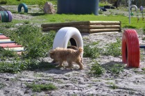 Banksia Park Puppies Brutus - 13 of 14