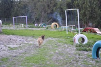 Banksia Park Puppies Brutus - 4 of 14