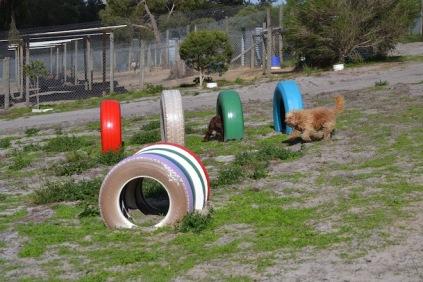 Banksia Park Puppies Brutus - 9 of 14
