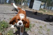 Banksia Park Puppies Caz
