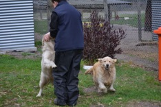 Banksia Park Puppies Elle and Oprah