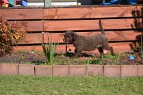 Banksia Park Puppies Fame