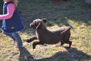 Banksia Park Puppies Fame