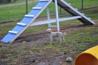 banksia-park-puppies-jack-10-of-11