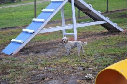 banksia-park-puppies-jack-9-of-11