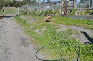 Banksia Park Puppies Kayla - 1 of 38