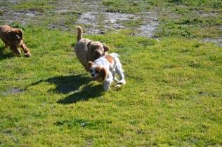 Banksia Park Puppies Kayla - 13 of 38