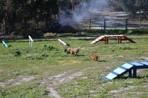Banksia Park Puppies Kayla - 18 of 38