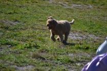 Banksia Park Puppies Kayla - 19 of 38