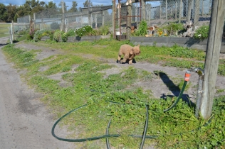 Banksia Park Puppies Kayla - 2 of 38