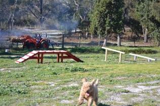 Banksia Park Puppies Kayla - 23 of 38