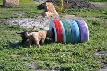 Banksia Park Puppies Kayla - 26 of 38