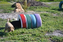 Banksia Park Puppies Kayla - 28 of 38