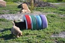 Banksia Park Puppies Kayla - 29 of 38
