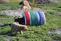 Banksia Park Puppies Kayla - 31 of 38