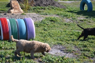 Banksia Park Puppies Kayla - 34 of 38
