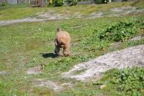 Banksia Park Puppies Kayla - 8 of 38
