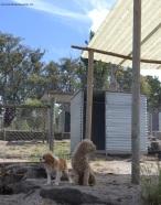 Banksia Park Puppies Kip