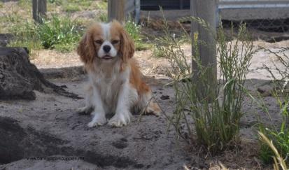 Banksia Park Puppies Leia