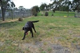 Banksia Park Puppies Lorna