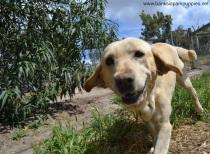 Banksia Park Puppies Maisie