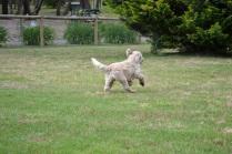 Banksia Park Puppies Margy