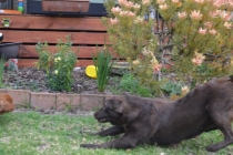 Banksia Park Puppies Mishka - 1 of 20