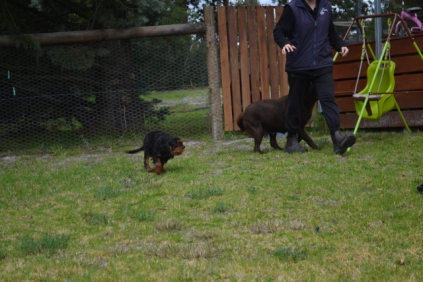 Banksia Park Puppies Mishka - 8 of 20