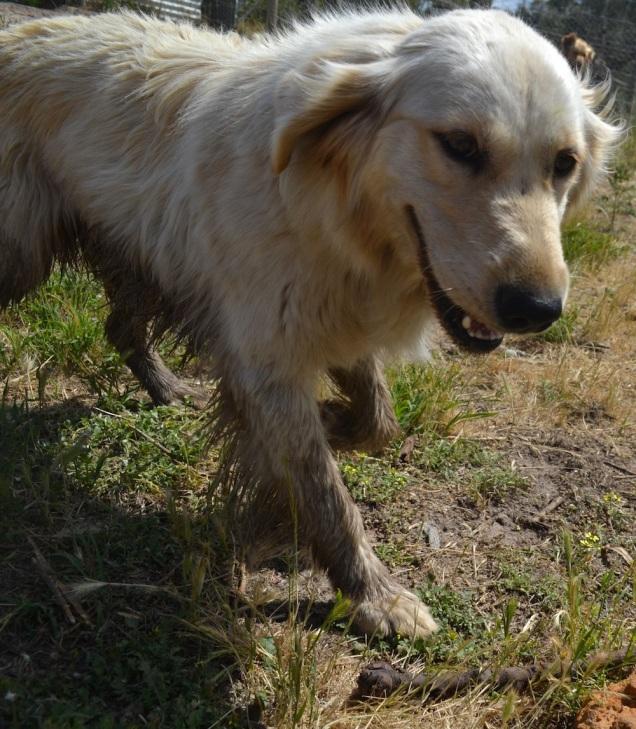 Banksia Park Puppies Opee