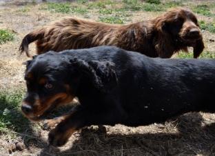 Banksia Park Puppies Poochy