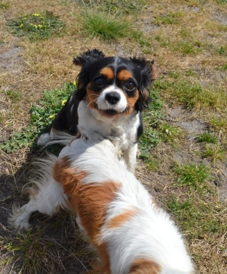 Banksia Park Puppies Princess