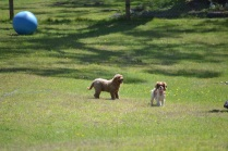 Banksia Park Puppies Red