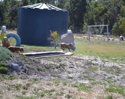 Banksia Park Puppies Sami - 1 of 15 (13)