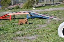 Banksia Park Puppies Sami - 29 of 36
