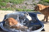 Banksia Park Puppies Sami - 4 of 36