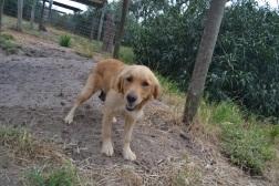 Banksia Park Puppies Sharna