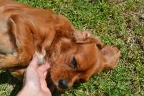 Banksia Park Puppies Shaz