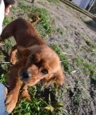 Banksia Park Puppies Shoz