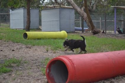 Banksia Park Puppies Snazzi