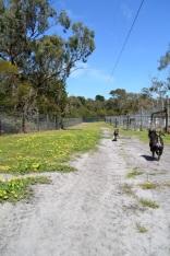 Banksia Park Puppies Snozzi