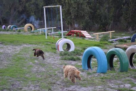 Banksia Park Puppies Walida - 1 of 26