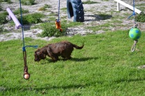 Banksia Park Puppies Walida - 10 of 26