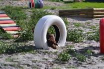 Banksia Park Puppies Walida - 11 of 26