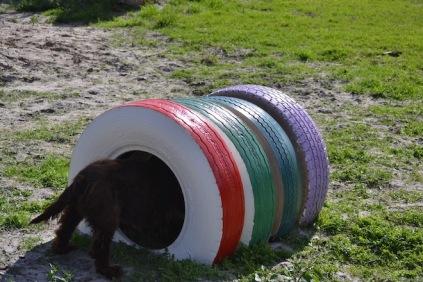 Banksia Park Puppies Walida - 12 of 26