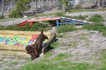 Banksia Park Puppies Walida - 14 of 26