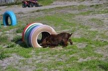 Banksia Park Puppies Walida - 15 of 26